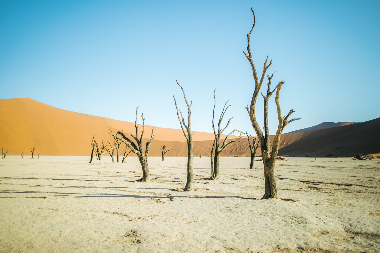 Travel photography prints for sale Deadvlei Namibia dead lake